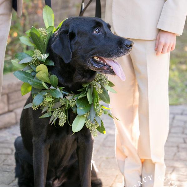 Tiffany & Chip - Wedding Ceremony & Portraits at White Oaks Ranch